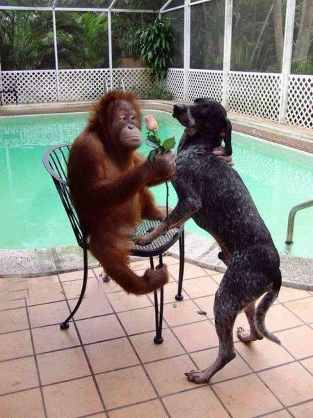 Отпадные фотки обезьяна, собака, цветок