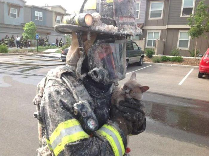 Юмор котенок, пожарник, спас