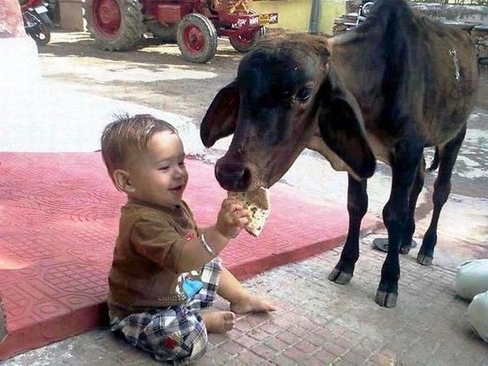 Фотоприкол онлайн кормит, корова, ребенок