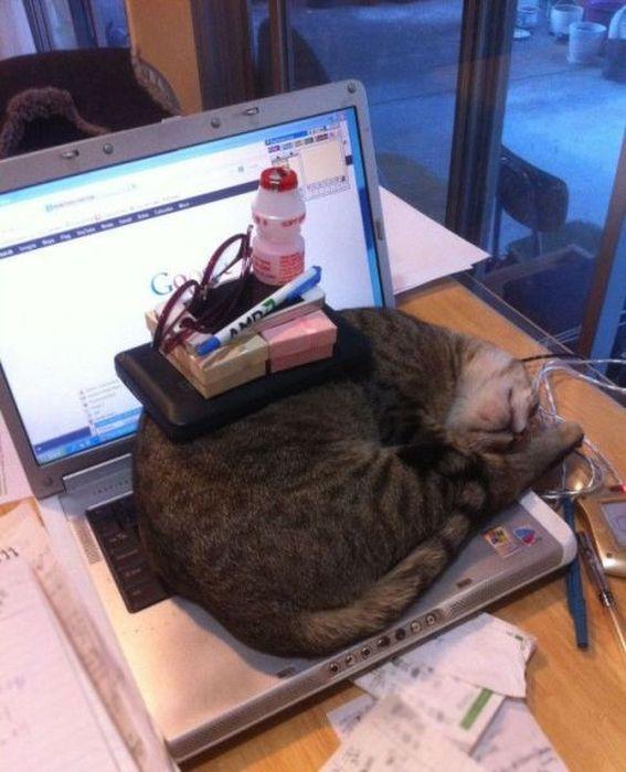 Смешная фотогалерея кот, ноутбук, прикол, спит