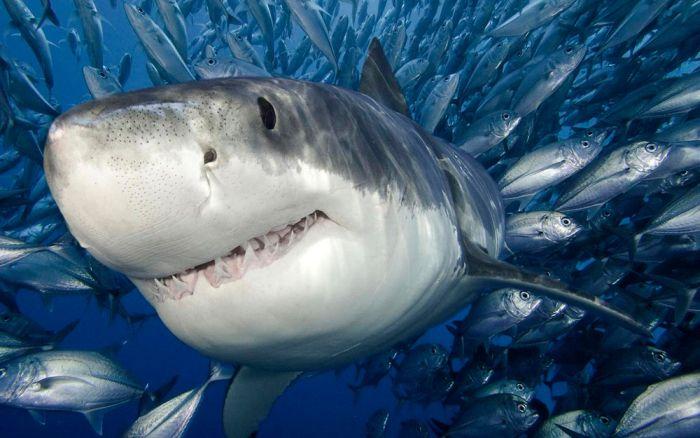 Фотоприкол недели акула, под водой, рыбы, хищник