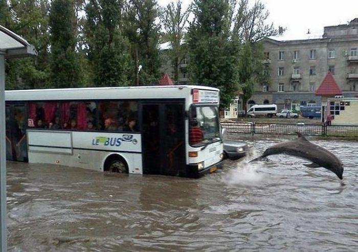 Фотожесть автобус, дельфин, потоп