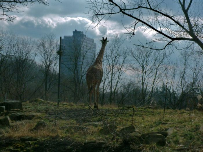 Красивые фото дом, жираф, лес, природа