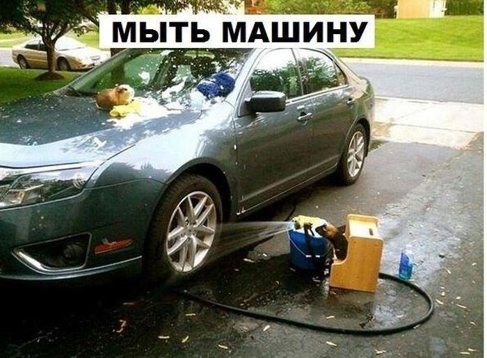 Обмыли машину картинки