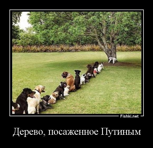 Дерево, посаженное Путиным