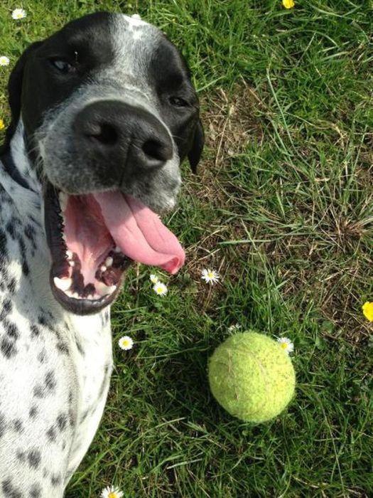 Красивые фото выражение лица, мячик, собака, язык