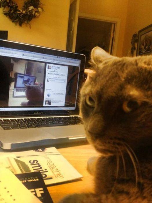 Фотка выражение лица, кот, кошка, прикол