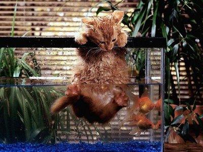 Kedilerin Banyo Sonrasıdaki Halleri