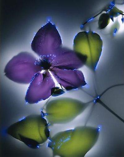 Растения под электричеством (15 фото)
