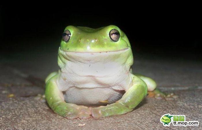 Чем питаются древесные лягушки? (9 фото)