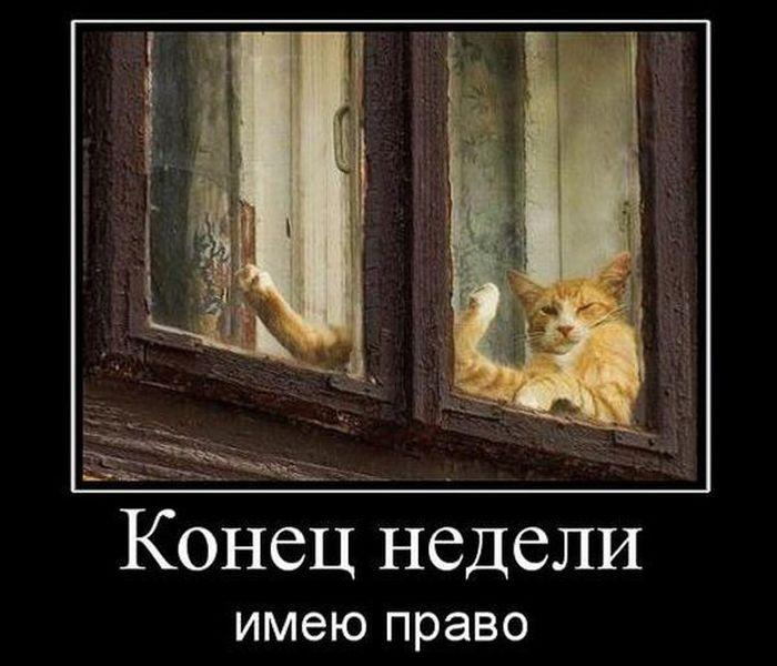 http://fishki.net/picsw/072010/09/post/demotivator/tn.jpg