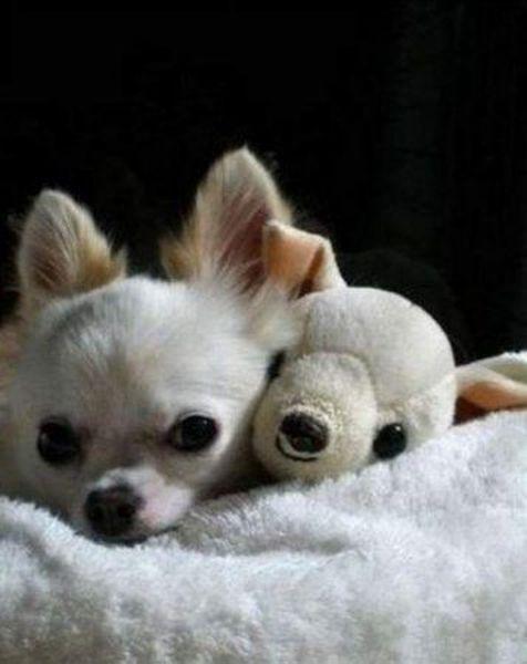 Зверушки с плюшевыми игрушками (19 фото)