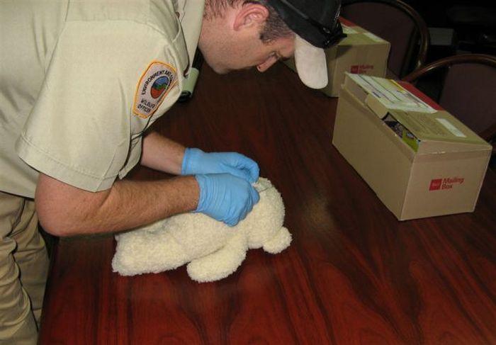 Контрабанда в детской плюшевой игрушке (3 фото)