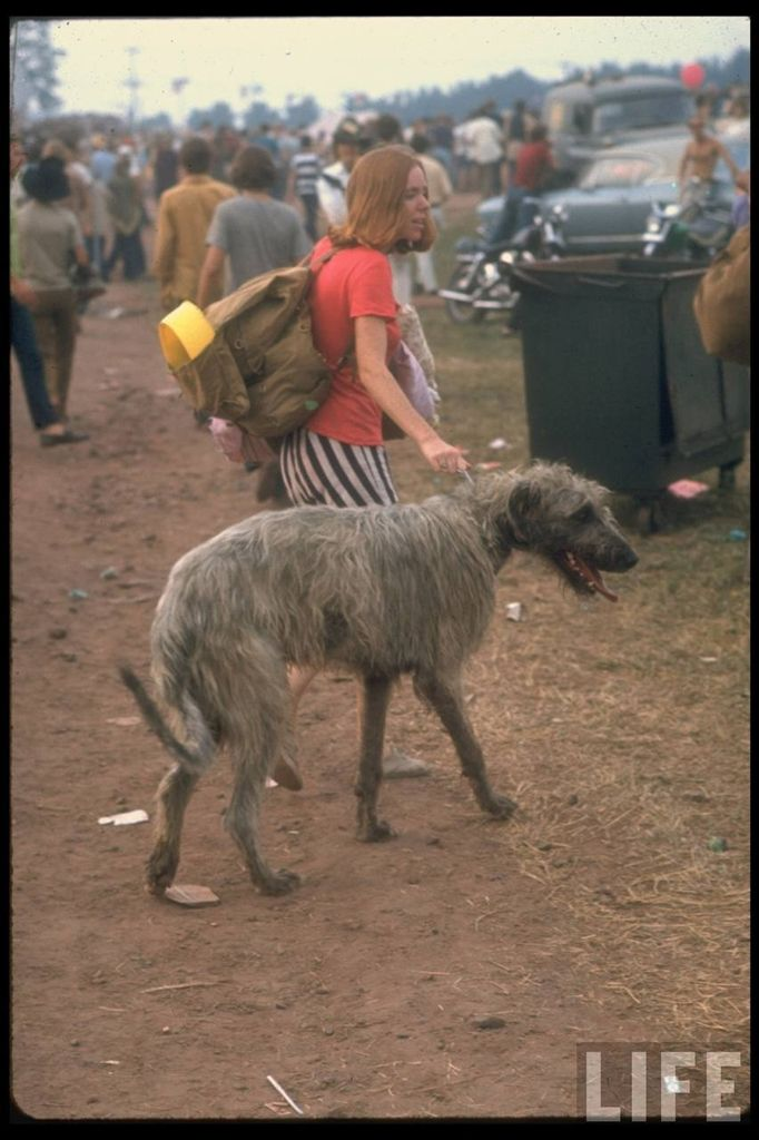 0 4144e  Вудсток 1969 года на снимках журнала Life