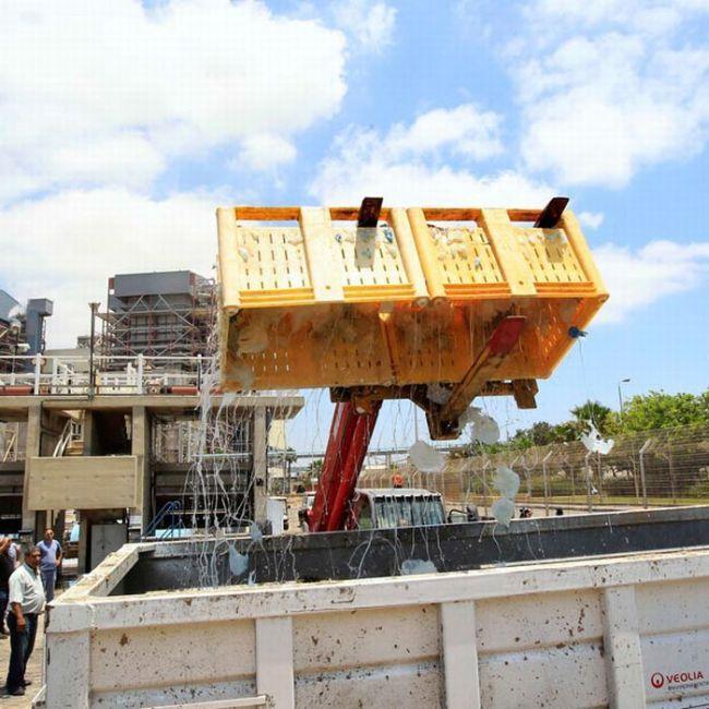 Израильскую электростанцию закрыли из-за медуз (12 фото)