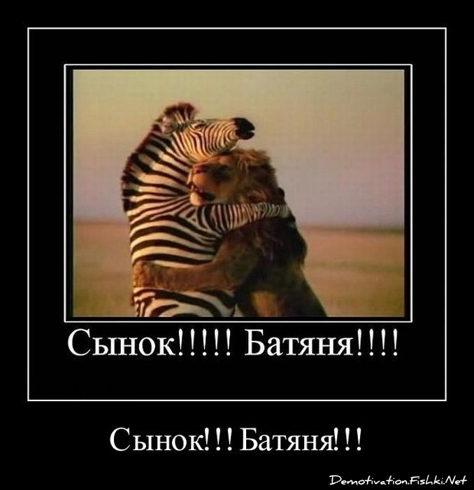 демотиватор с зеброй низкой цене