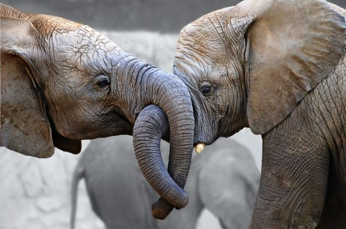 Смешная картинка слон, открытка куплю картинки