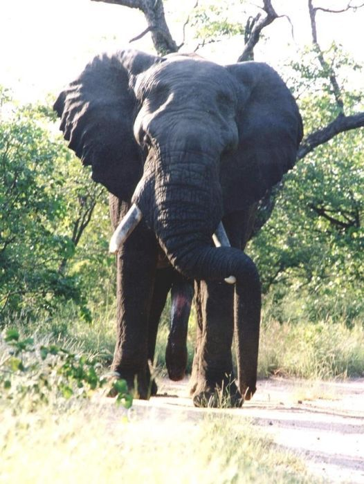 ферментов, как стояк у слона фото Новопокровская Краснодарский