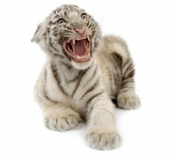 классные картинки с животными: