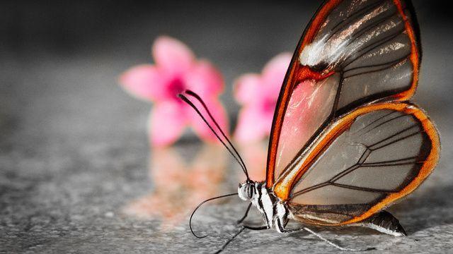 Афоризмы, выражения, изречения, статусы, цитаты, высказывания, фразы про бабочек, о бабочках
