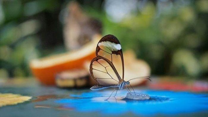 Необычные бабочки (7 Фото)