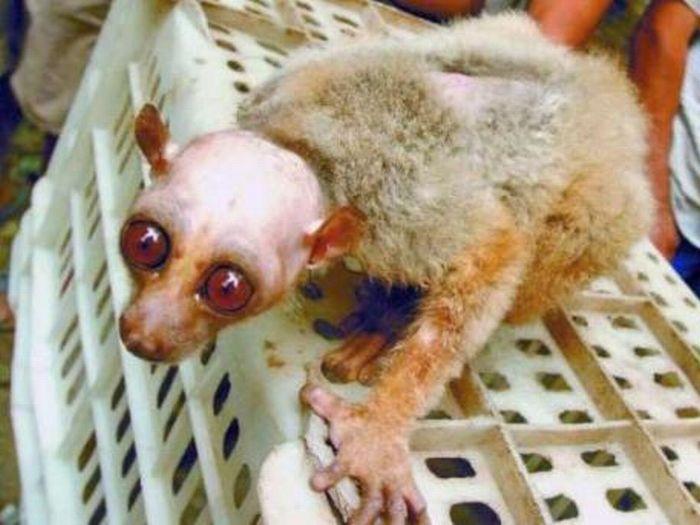 Очень страшная обезьянка (3 фото)