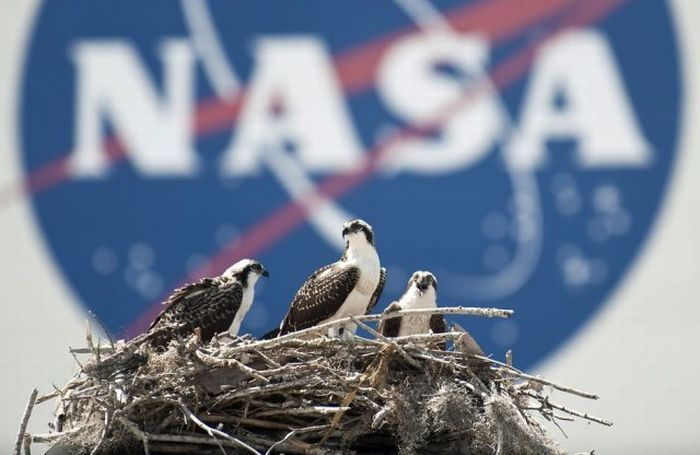 Обитатели около космодрома (12 фото)