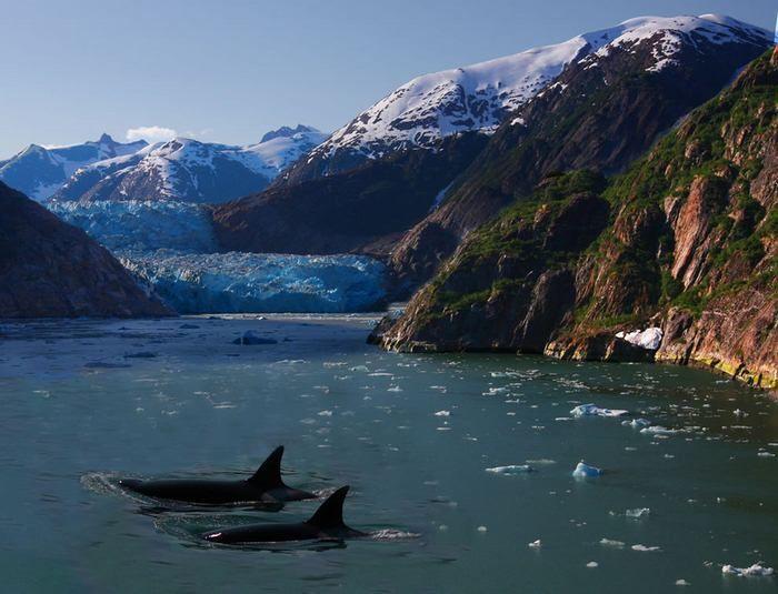 Зачаровывающие айсберги (35 Фото)