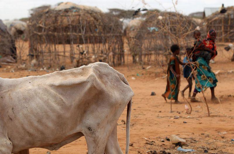 hungymamafrika18 Голод в Восточной Африке