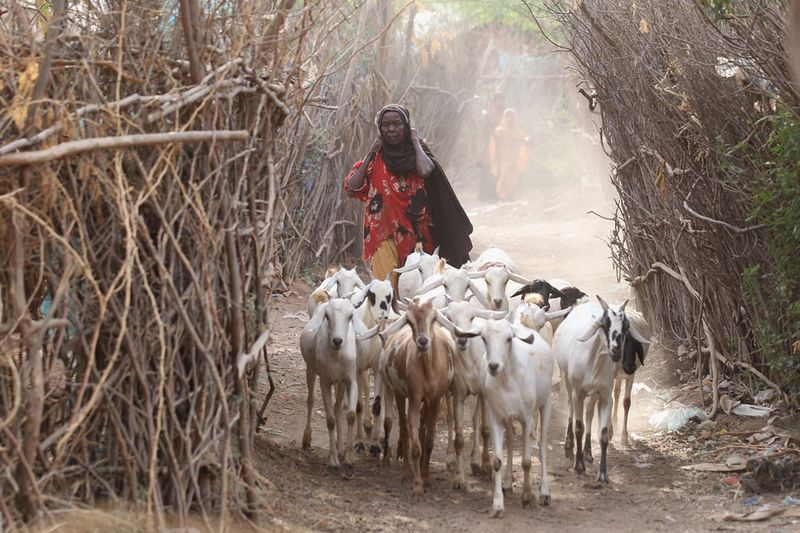 hungymamafrika20 Голод в Восточной Африке