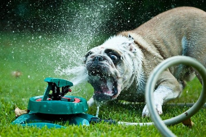 Радостная битва: собаки против брызг (25 фото)