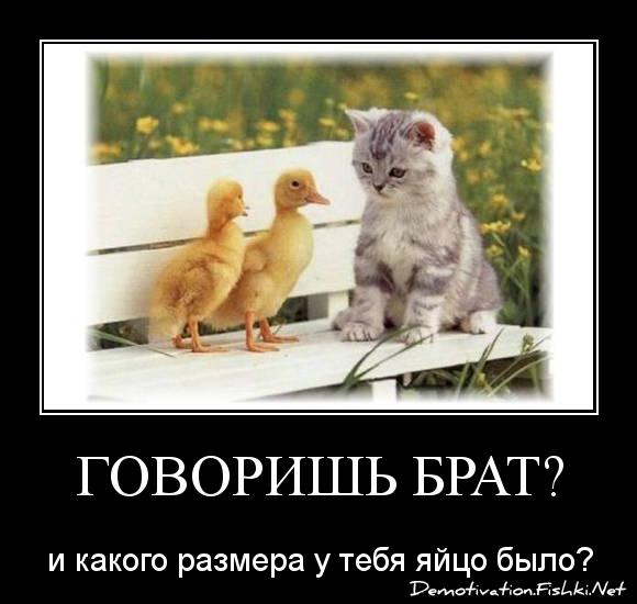 говоришь брат?