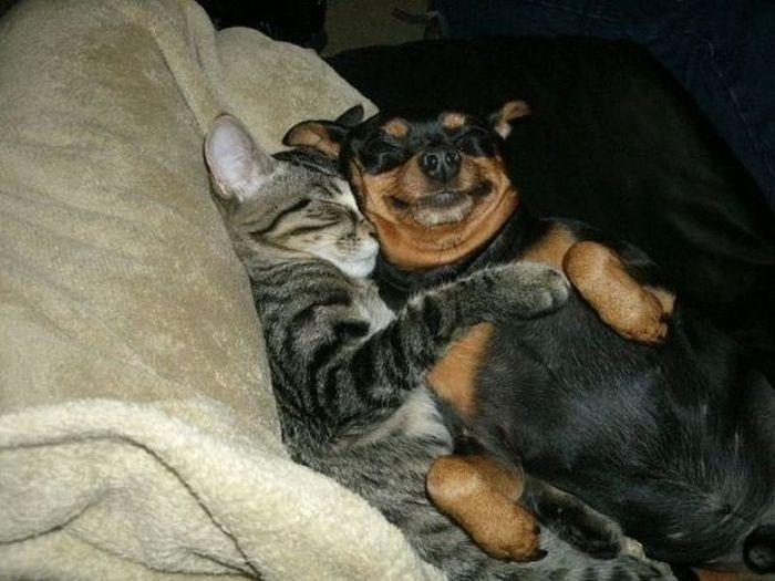 Картинки мультфильм, смешные картинки приколы с кошками собаками