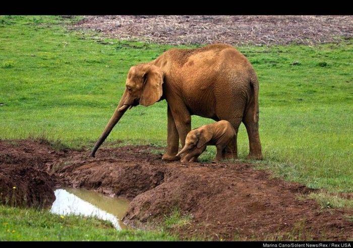 Мама всегда придет на помощь (4 фото)