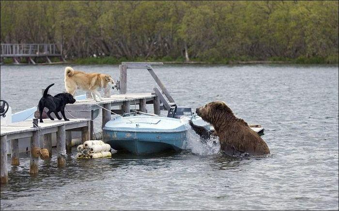 Медведь проголодался (3 фото)
