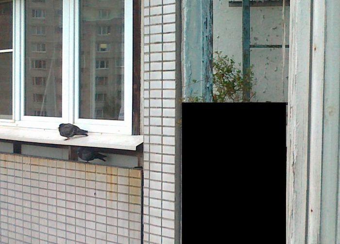 На балконе можно увидеть это! (3 фото + 1 видео)