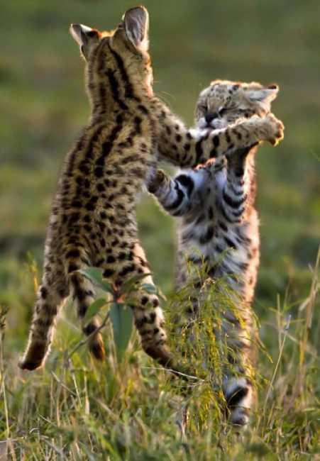 Животные против олимпийцев (28 фото)