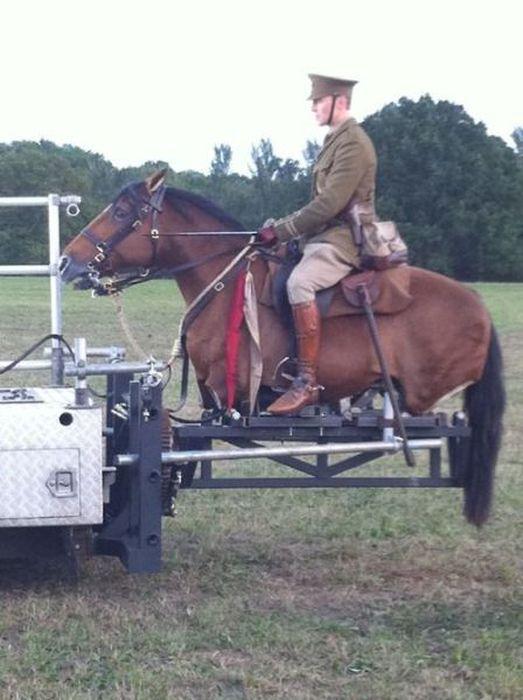 Фото инвалид, лошадь, наездник, съемки