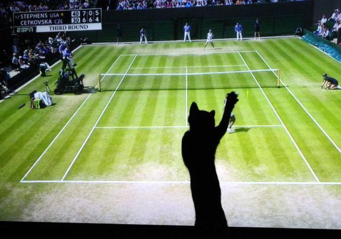Прикол кошка, силуэт, теннис, тень