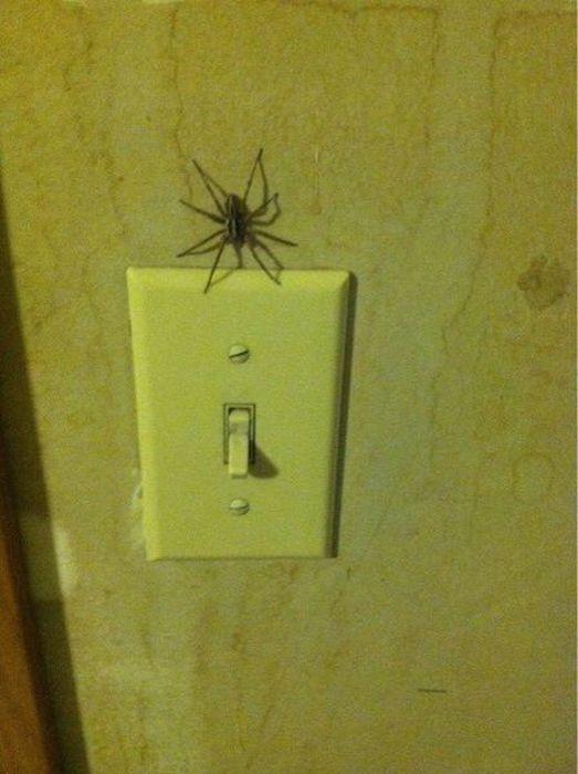 Прикол выключатель, жесть, насекомое, паук