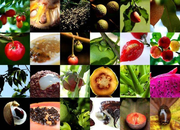 польза, туризм, фрукты, экзотика