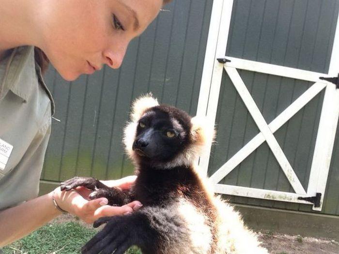 Зачетное фото девушка, лимур, обезьяна
