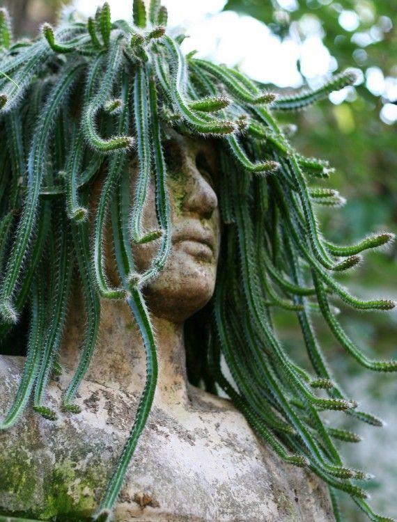 Юмор волосы, кактус, медуза горгона