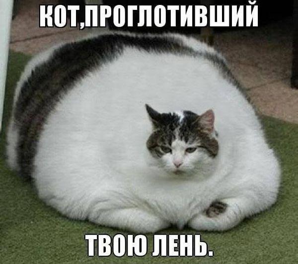 Фото жирный, кот, огромный, толстый