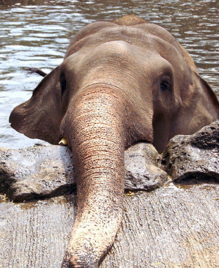 Слон картинка смешная