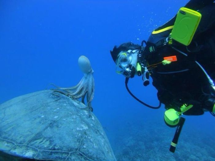 Фотоприкол онлайн аквалангист, осьминог, под водой, смотрит