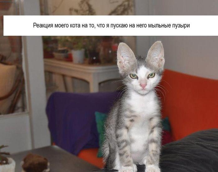 Фотоальбом картинка с надписью, кот, питомец