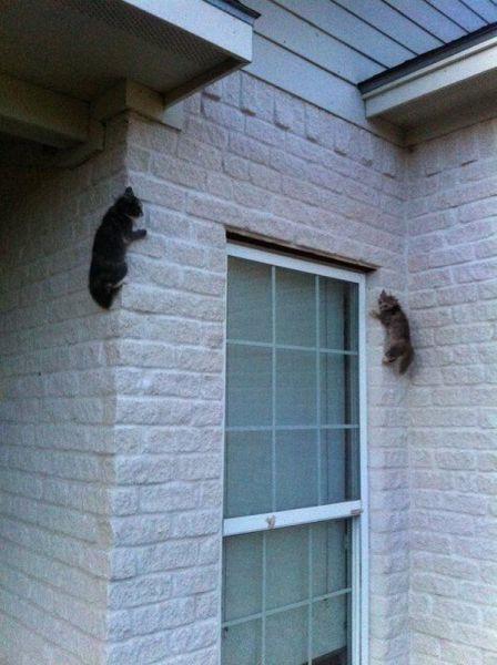 Фотоприкол фото животные, коты котенок, на стене