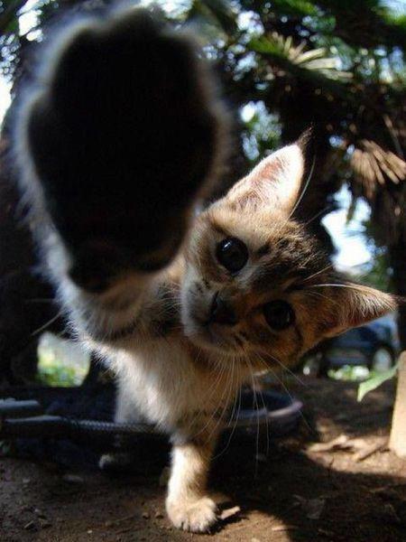 Красивые фото жесть, котенок, лапа