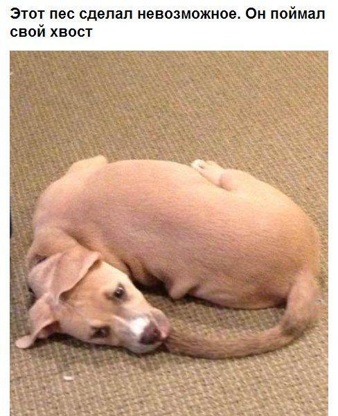 Фанни фото пес, удача, успех, хвост